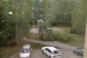 Во дворах Каменска-Уральского продолжают падать деревья