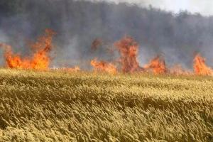 Видеоподробности пожара под Каменском-Уральским, где сгорели 100 гектаров высококлассной пшеницы на 4 миллиона рублей