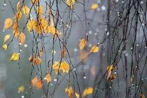 Зиму в Каменске-Уральском обещают уже в ноябре. И она будет холоднее прошлой. Но на этой неделе должно быть теплее обычного
