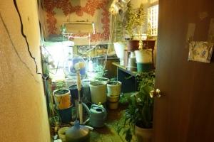 Наркоплантацию организовал у себя в квартире 43-летний житель Каменска-Уральского
