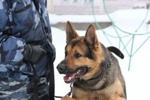 В Каменске-Уральском пёс Самурай помог задержать магазинных грабителей