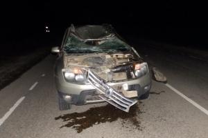 Под Каменском-Уральским лось стал виновником ДТП, в котором пострадал водитель