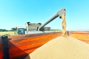 Каменские аграрии не рады большому урожаю зерновых. И снижения цен на хлеб ожидать не следует