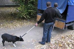 Отлавливать бездомных собак в Каменске-Уральском будут специалисты ООО «Дарби»