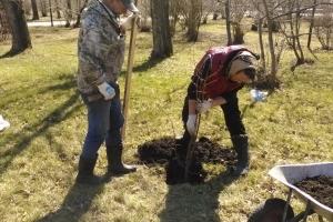 В парке трубников в Каменске-Уральском высадили почти два с половиной десятка лип