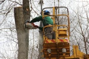 В Каменске-Уральском на валку и омолаживание деревьев до сентября планируют потратить почти миллион. По каким адресам