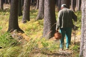 Спасатели призвали грибников и ягодников Каменска-Уральского, как и всей области, быть внимательней в лесу. И дали несколько полезных советов