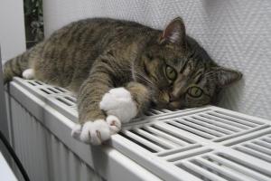В Каменске-Уральском стали реже жаловаться на отсутствие тепла в квартирах