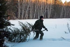 Сложно, но дешевле. Жителям Каменска-Уральского, как и всей области, объяснили, как самостоятельно добыть елку к Новому году